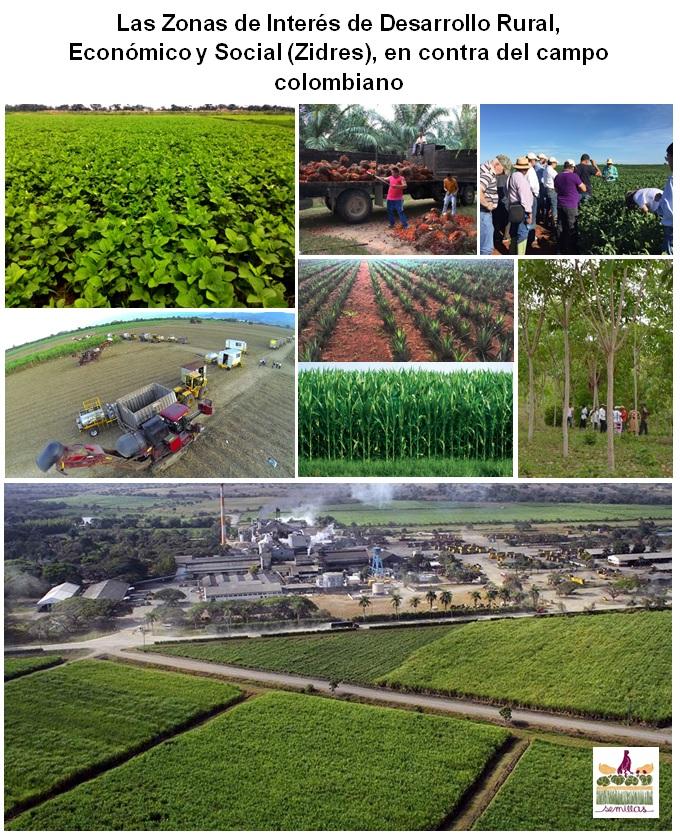 Gráfica alusiva a Las Zonas de Interés de Desarrollo Rural, Económico y Social (Zidres), en contra del campo colombiano