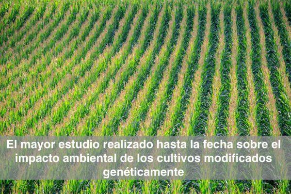 Gráfica alusiva a El mayor estudio realizado sobre cultivos modificados genéticamente y medioambiente